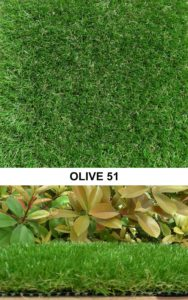 Olive 51